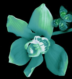 orchid butterfly green