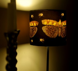 moth lamp...drawn to the light